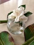NC gardenia blossum image - June 2013