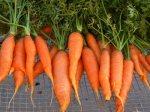 yogaearth.com's carrots image