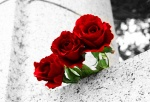 three roses image
