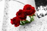 three roses image