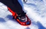 a snowshoe